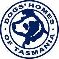 Dogs home.jpg