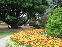 tulip-time-corbett-gardens.jpg