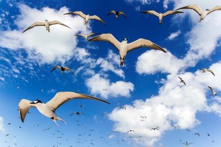 Seagulls-web.jpg